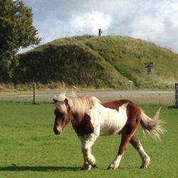 sarahs hestemassage tilbud