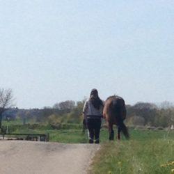 rygproblemer heste hestemassage