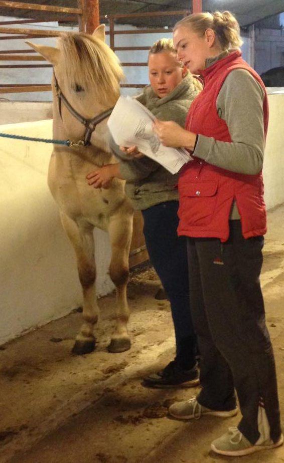 Sarahs hestemassage kursus til husbehov