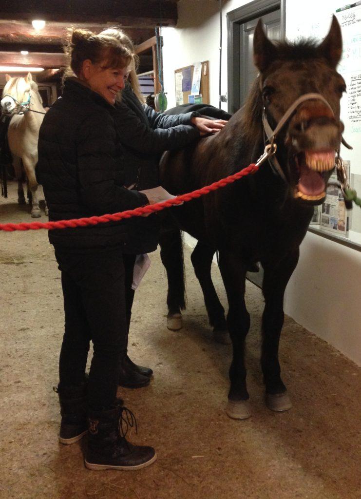 sarahs hestemassagekursus glad hest