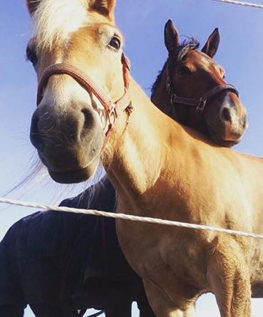 sarahs hestemassage kurser