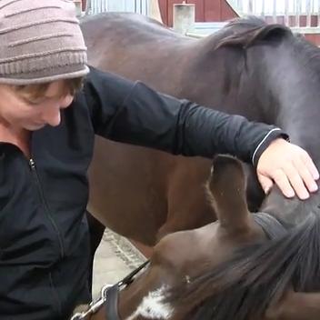 sarahs hestemassage kursus hestemassør det blideste greb