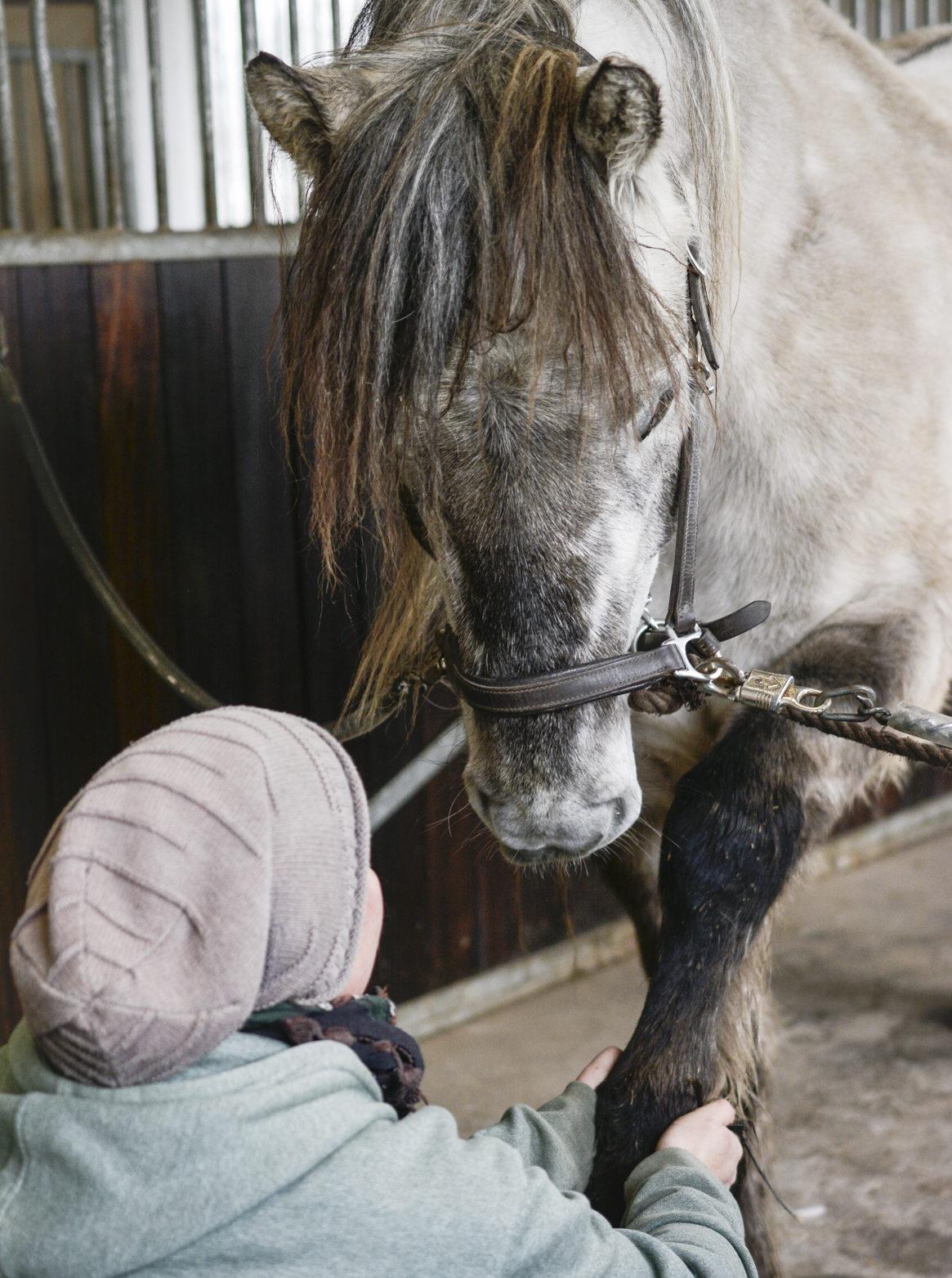 hestemassage rideskoler erhverv rideskoleheste pris