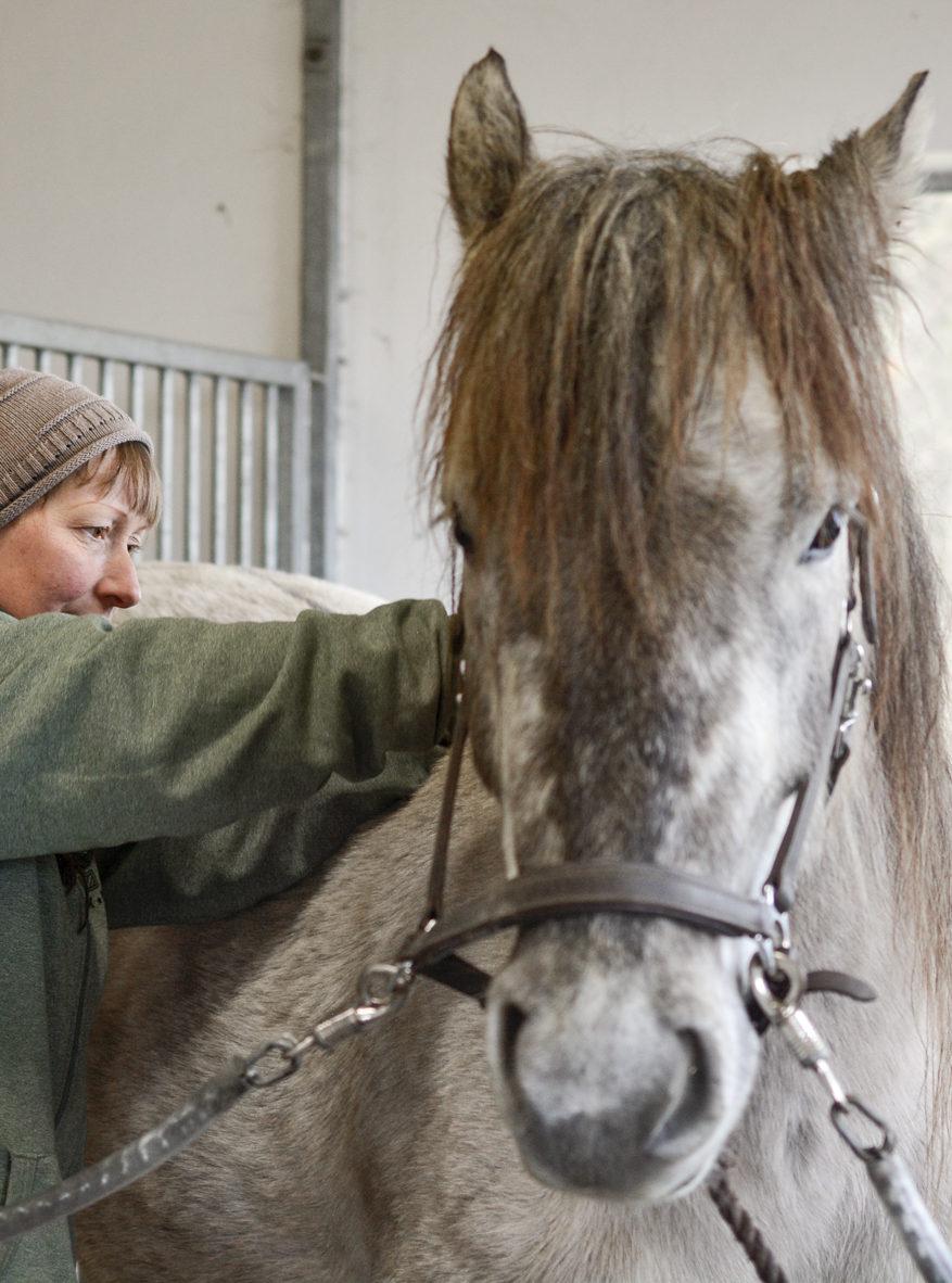 hestemassage behandling