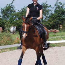 hestemassage travle rytter