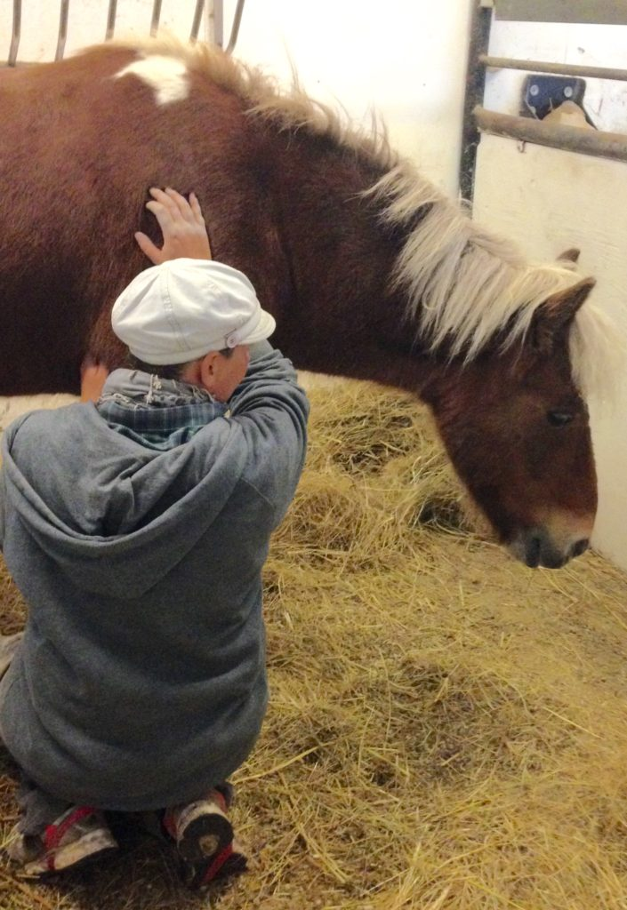 sarahs hestemassage behandling islaender