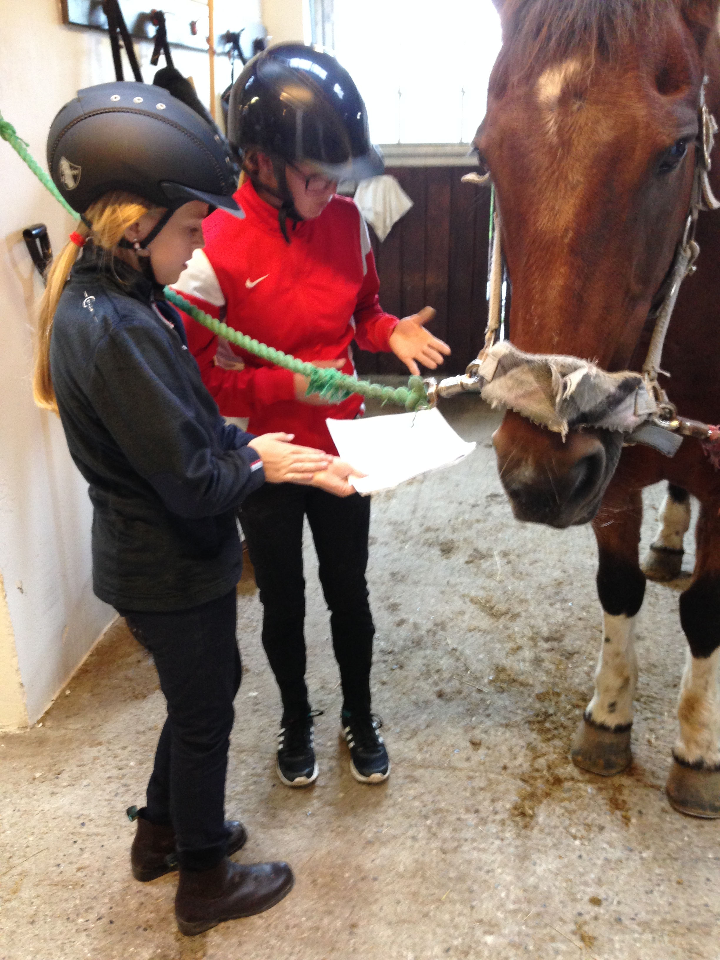 kursus hestemassage rideskole