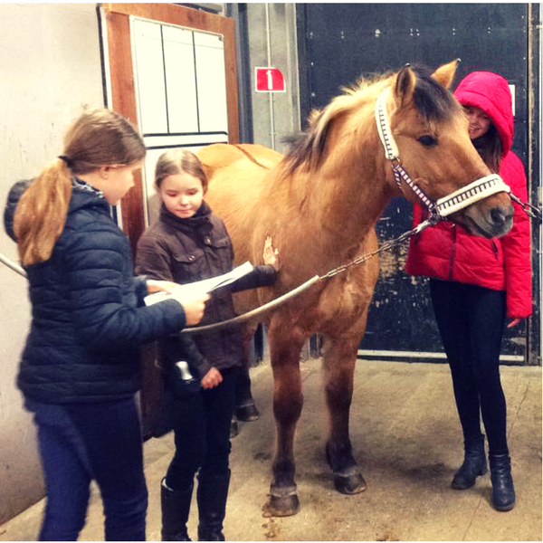 basiskursus i hestemassage