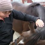hestemassage til husbehov onlinekursus