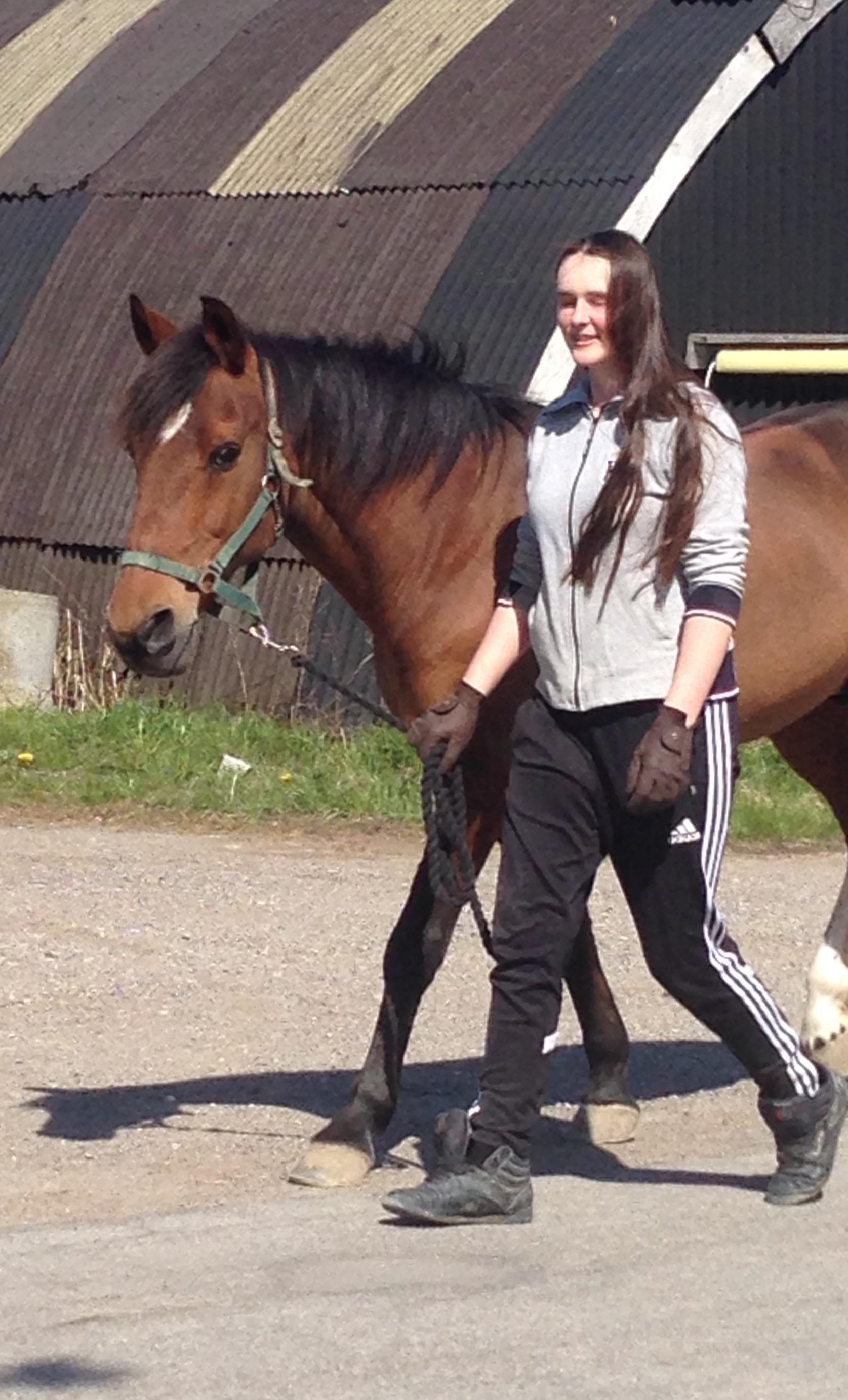 gaa med hesten efter massage