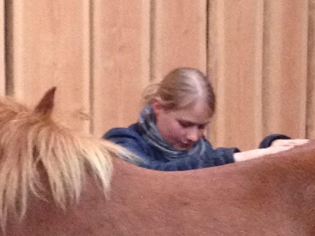 kursus i intuitiv hestemassage til husbehov