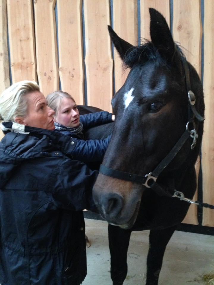 kursus i intuitiv hestemassage svendborg