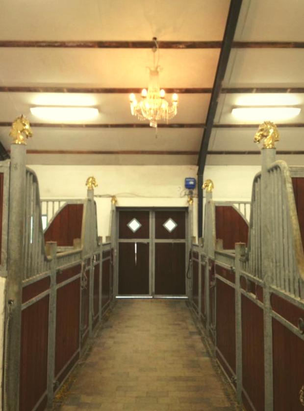bliv kursusvært hestemassage