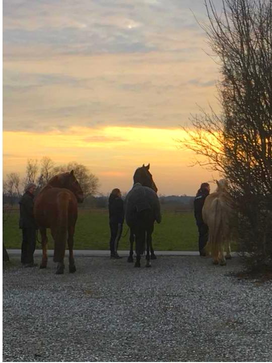 hestemassage afspænding solnedgang