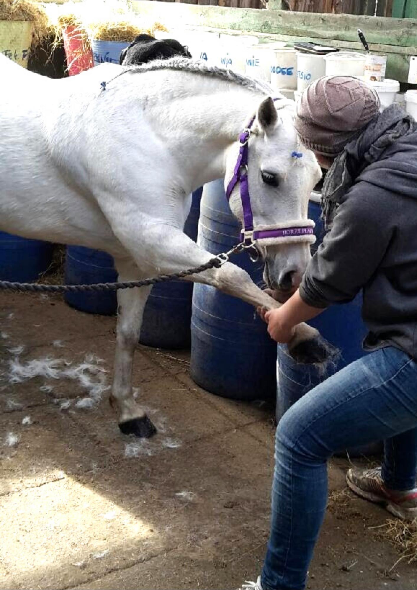 stræk hest pony hestemassage online kursus