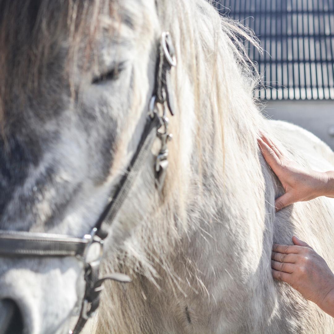 hest skulderproblemer løsgjort onlinekursus