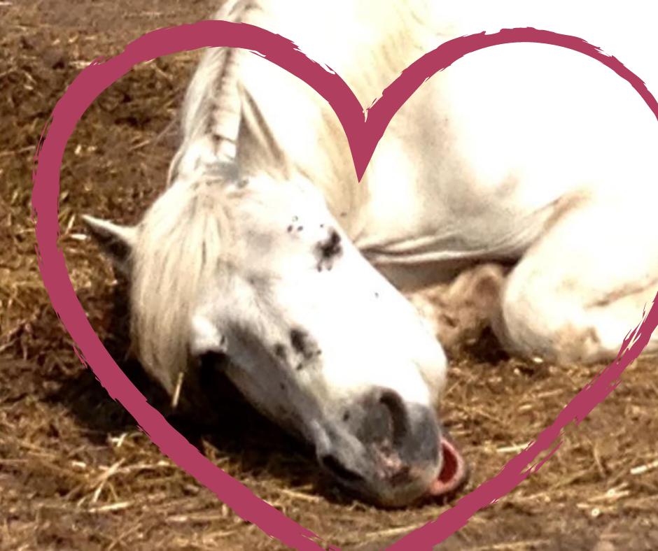 kend din hest forstå din hest