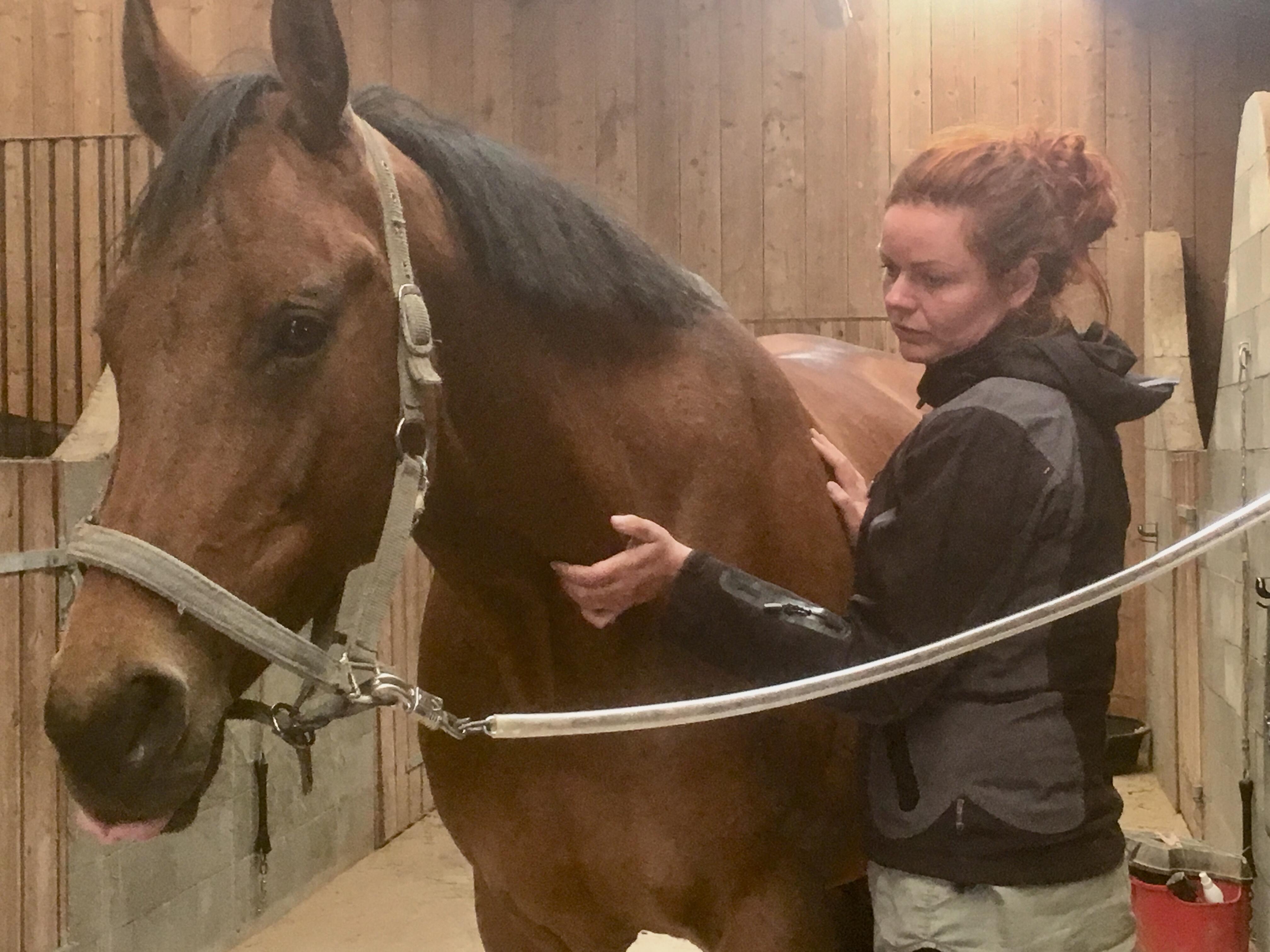 intuitiv hestemassageterapeut