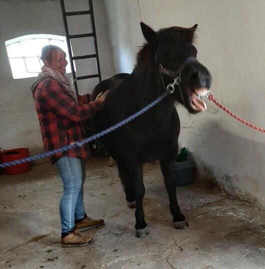 islænder hestemassage kursus intuitiv sarahs